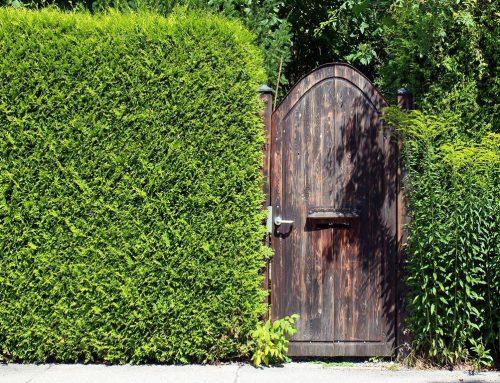 Vrste i održavanje živih ograda